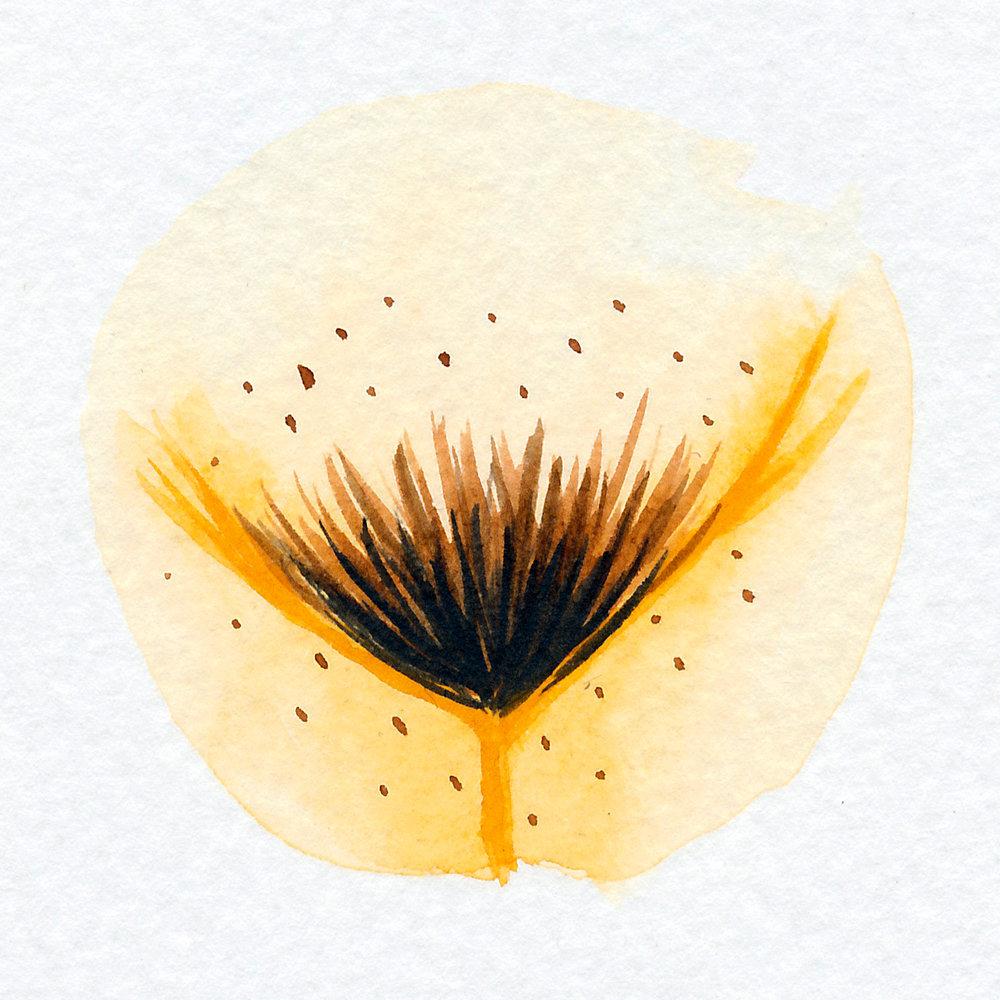 Vulva Gallery Yellow97.jpg