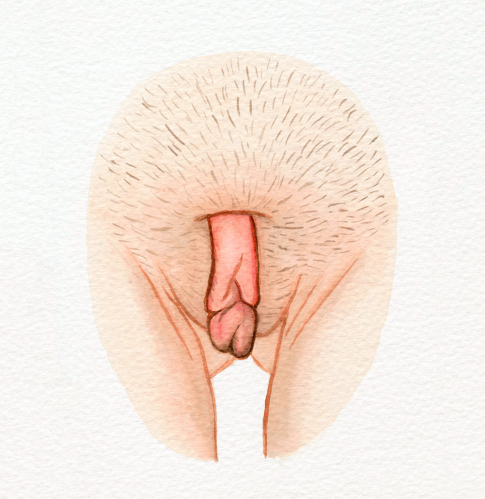 The Vulva Gallery - Vulva Portrait #12.jpg
