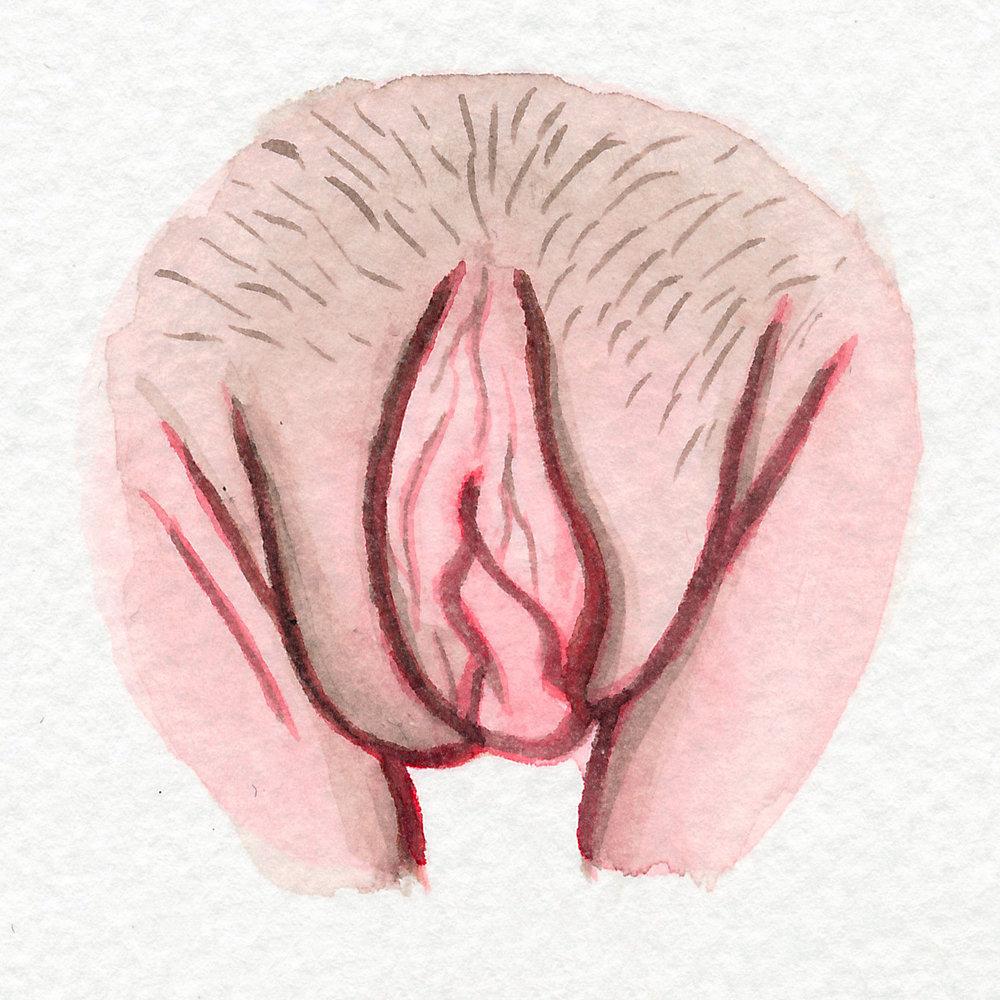 The Vulva Gallery - Vulva Portrait #27.jpg