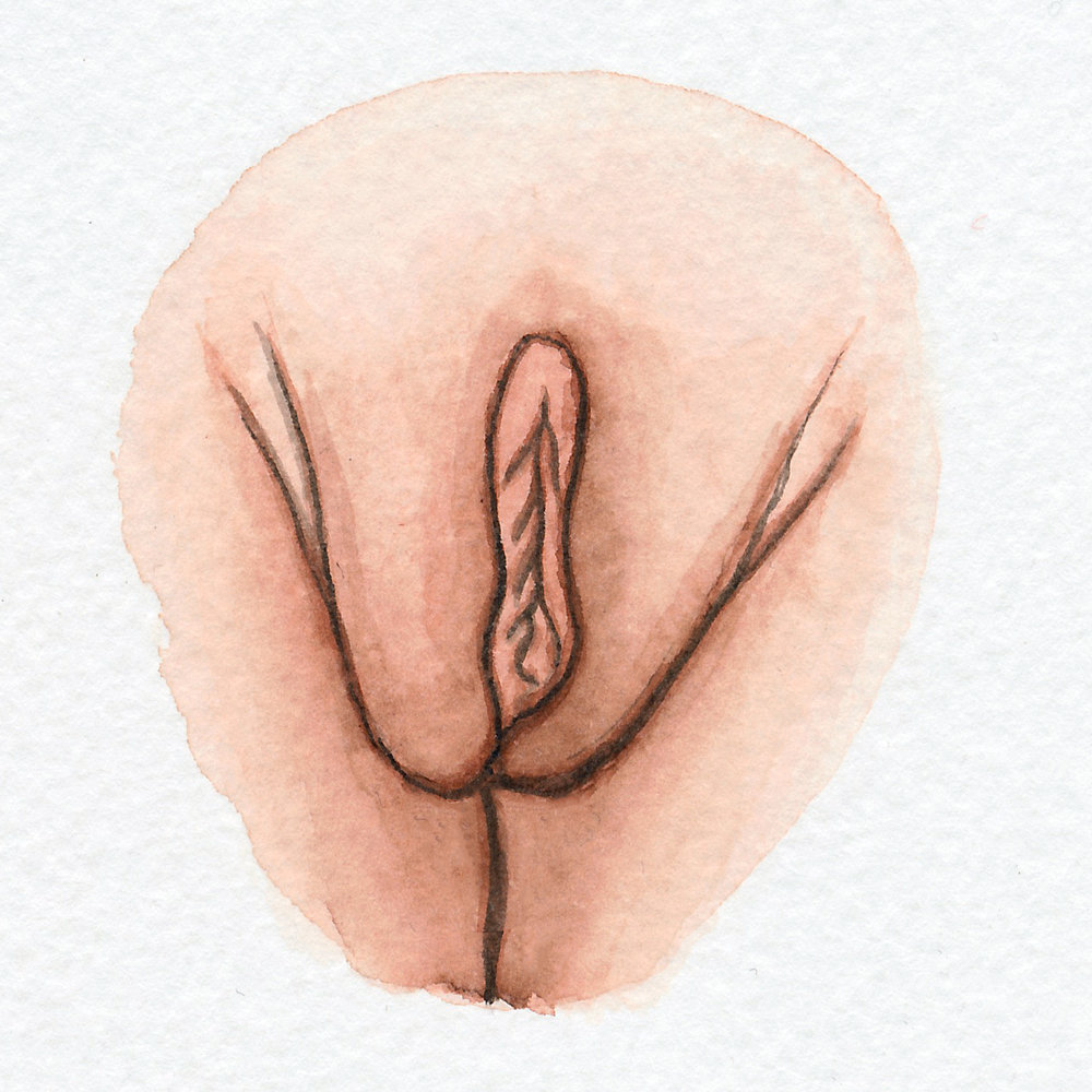 The Vulva Gallery - Vulva Portrait #16.jpg