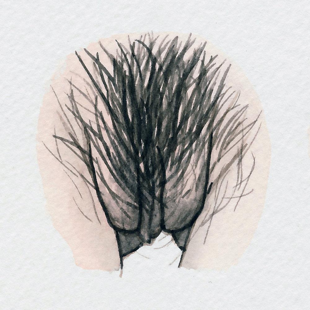 The Vulva Gallery - Vulva Portrait #111.jpg