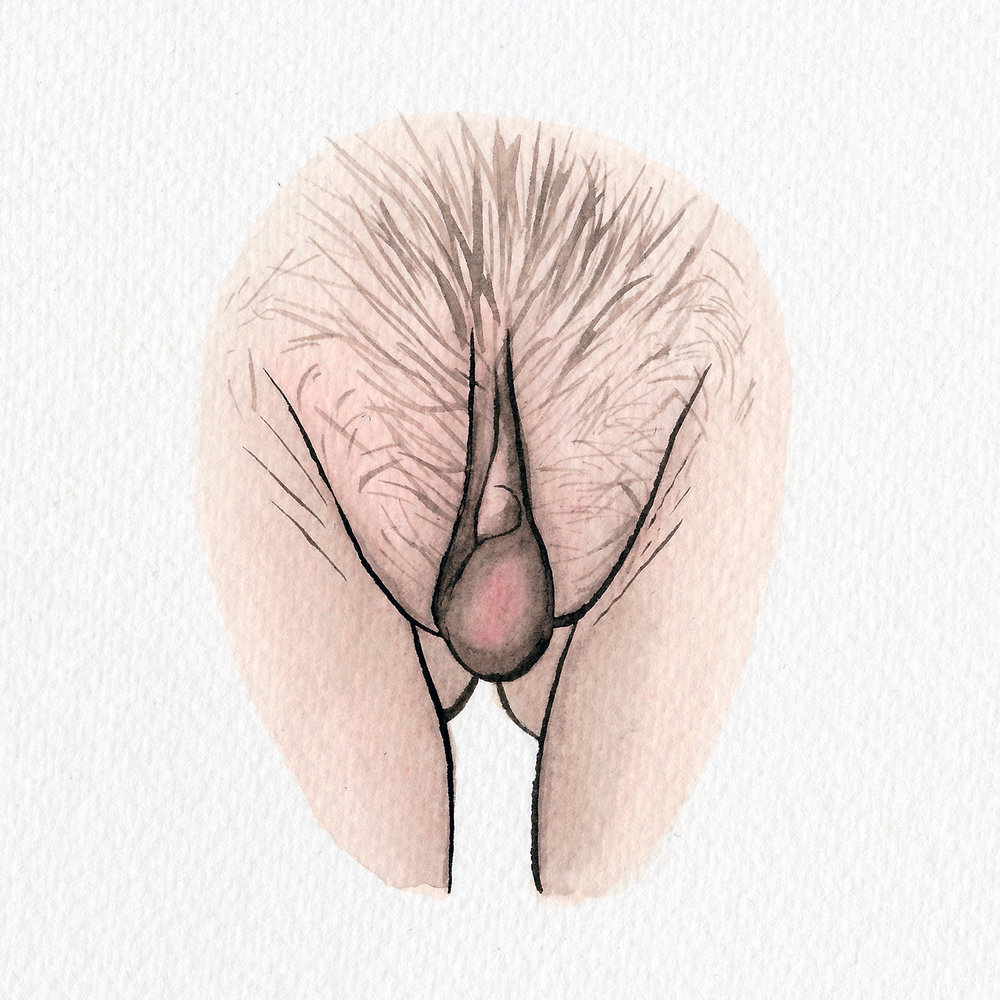 The Vulva Gallery - Vulva Portrait #26 (square).jpg