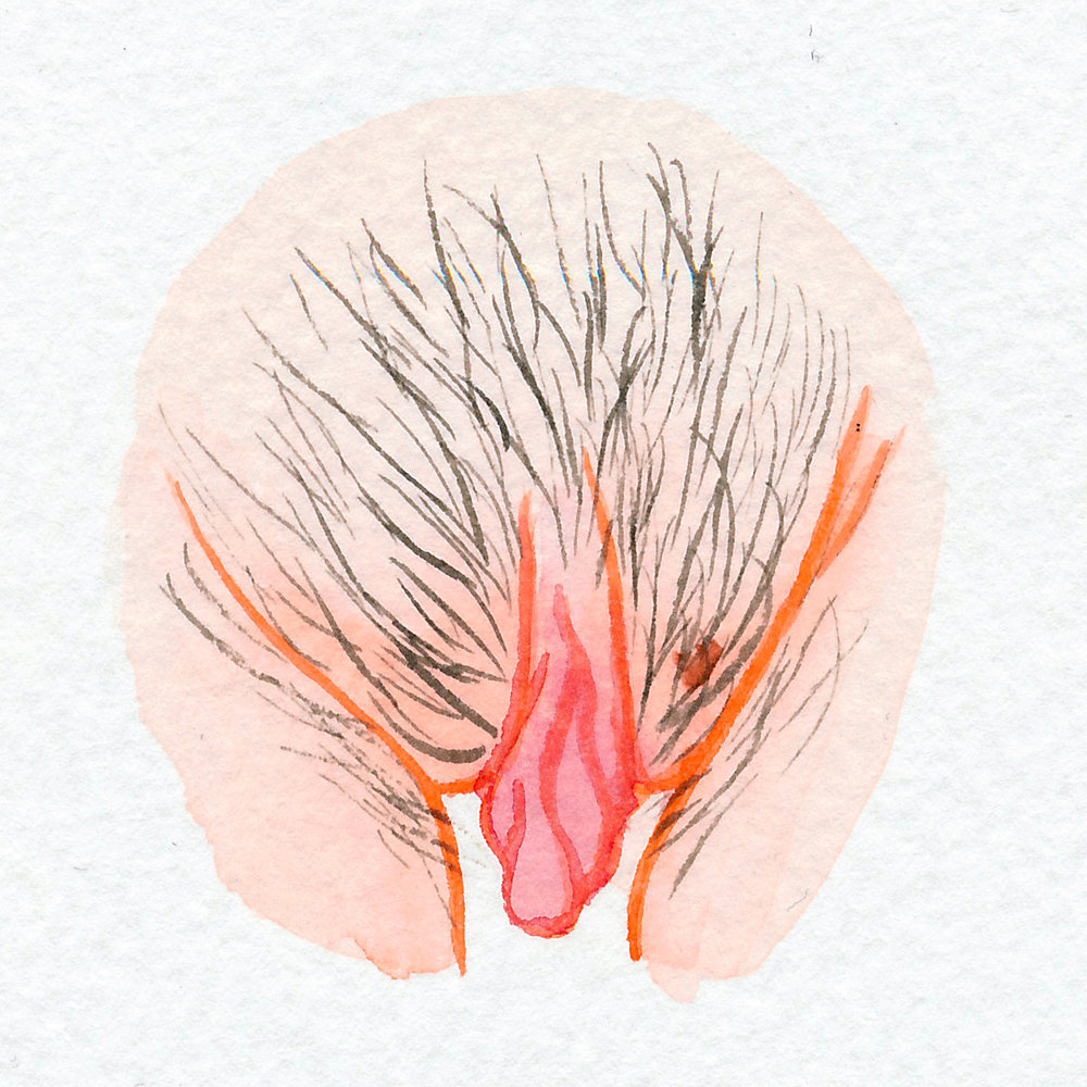 The Vulva Gallery - Vulva Portrait #62.jpg