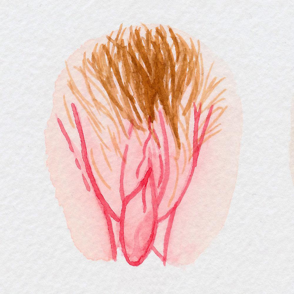 The Vulva Gallery - Vulva Portrait #93.jpg