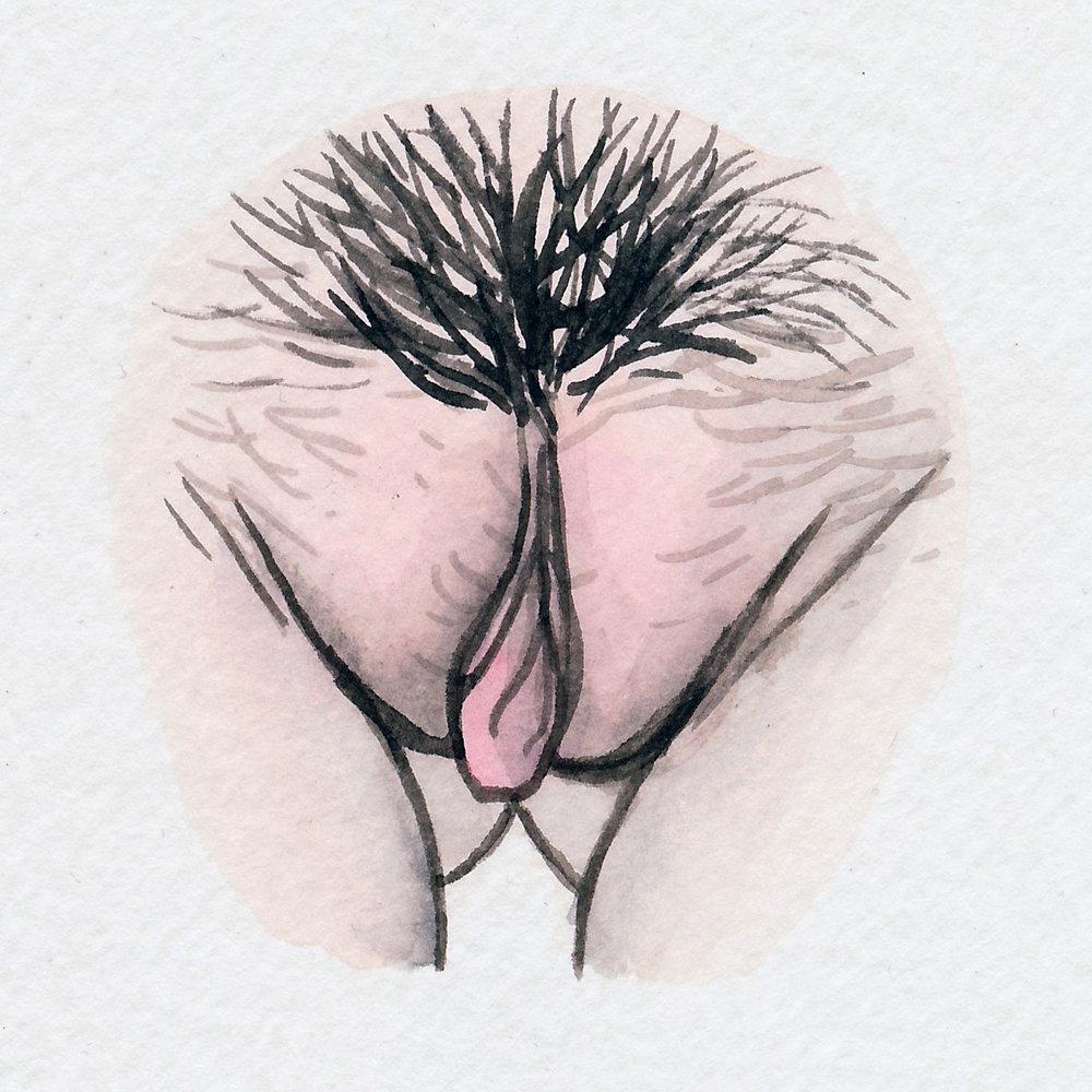 The Vulva Gallery - Vulva Portrait #88.jpg