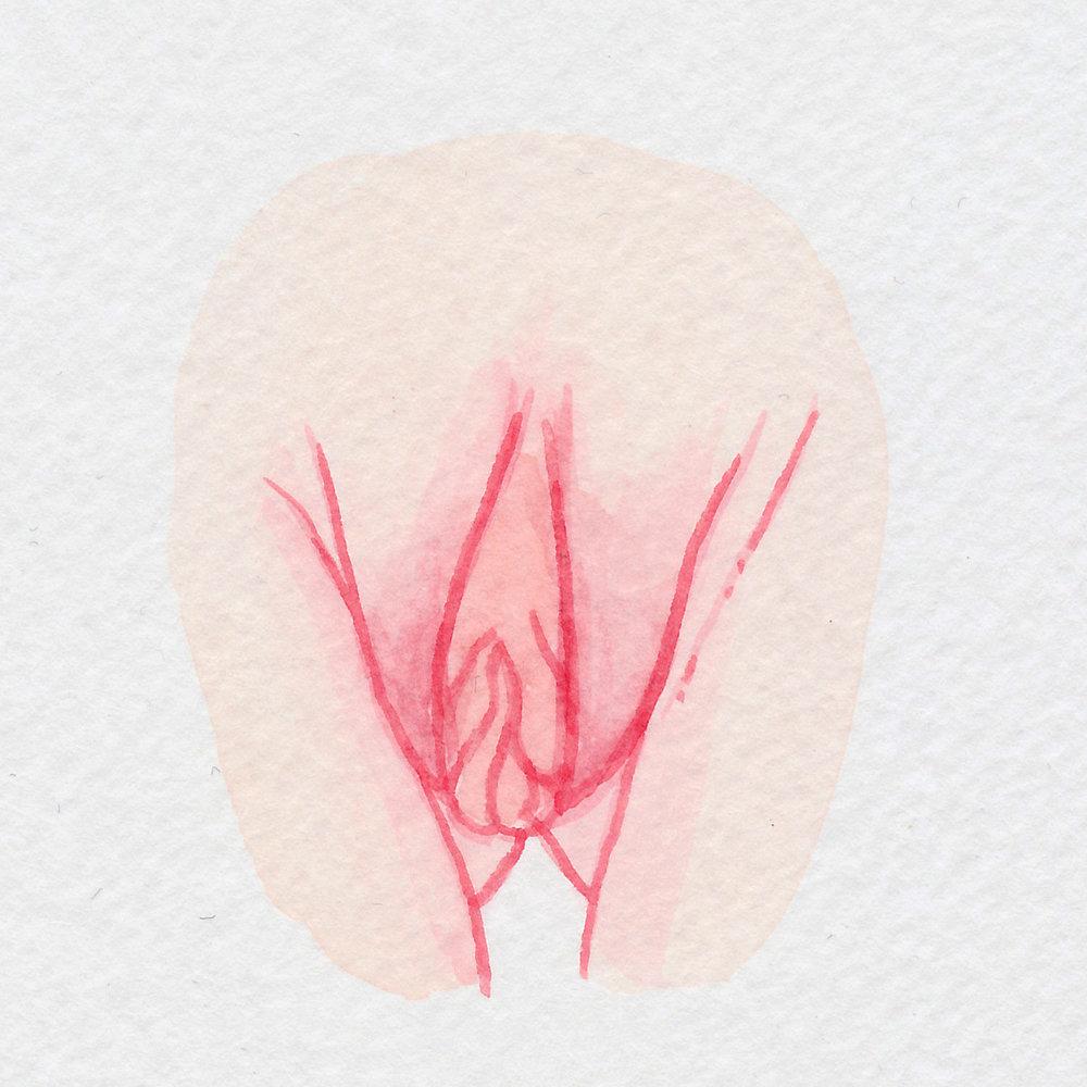 The Vulva Gallery - Vulva Portrait #92.jpg