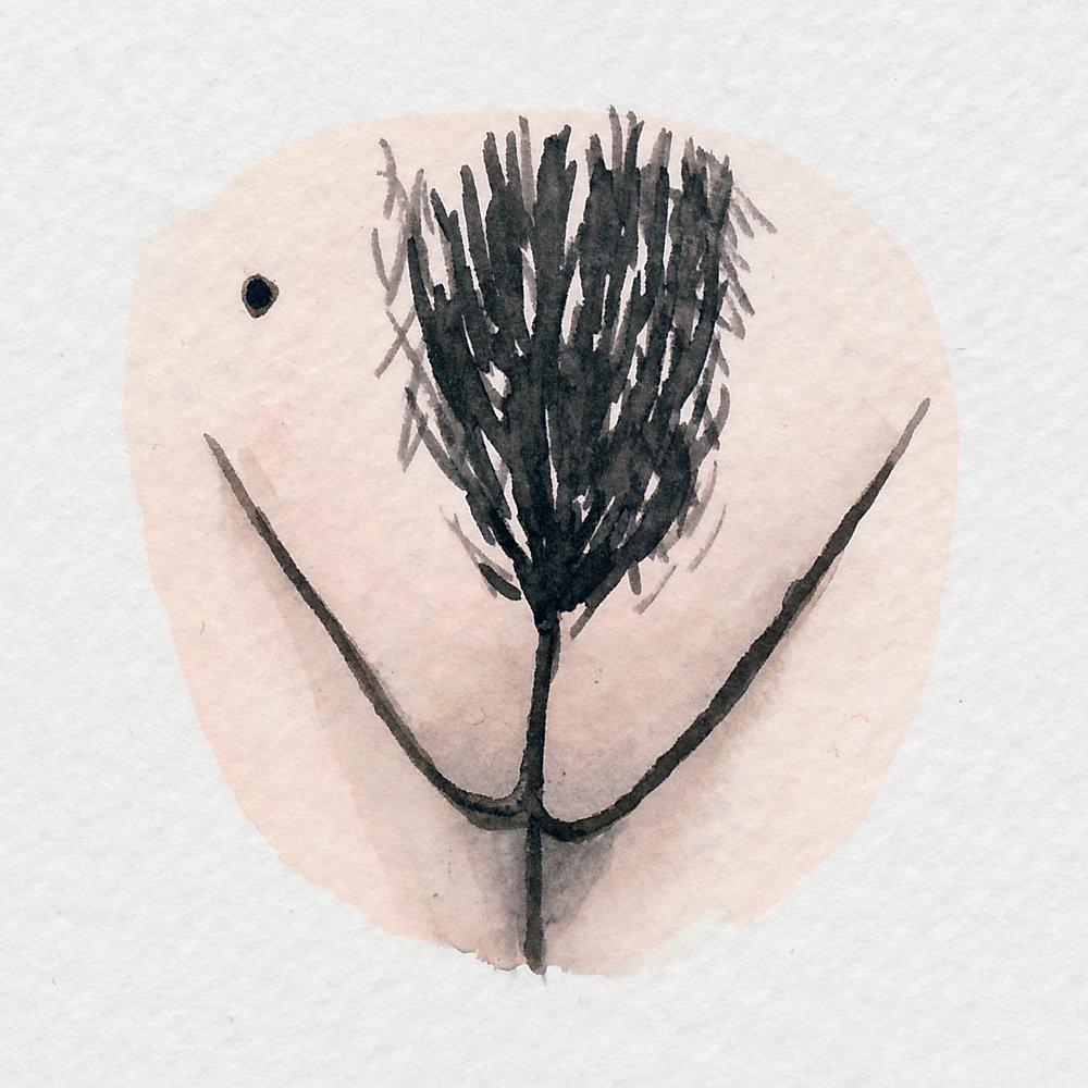 The Vulva Gallery - Vulva Portrait #95.jpg