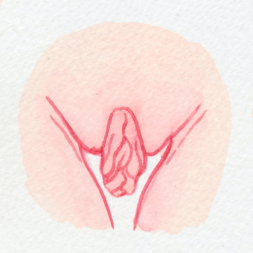 The Vulva Gallery - Vulva Portrait #114.jpg
