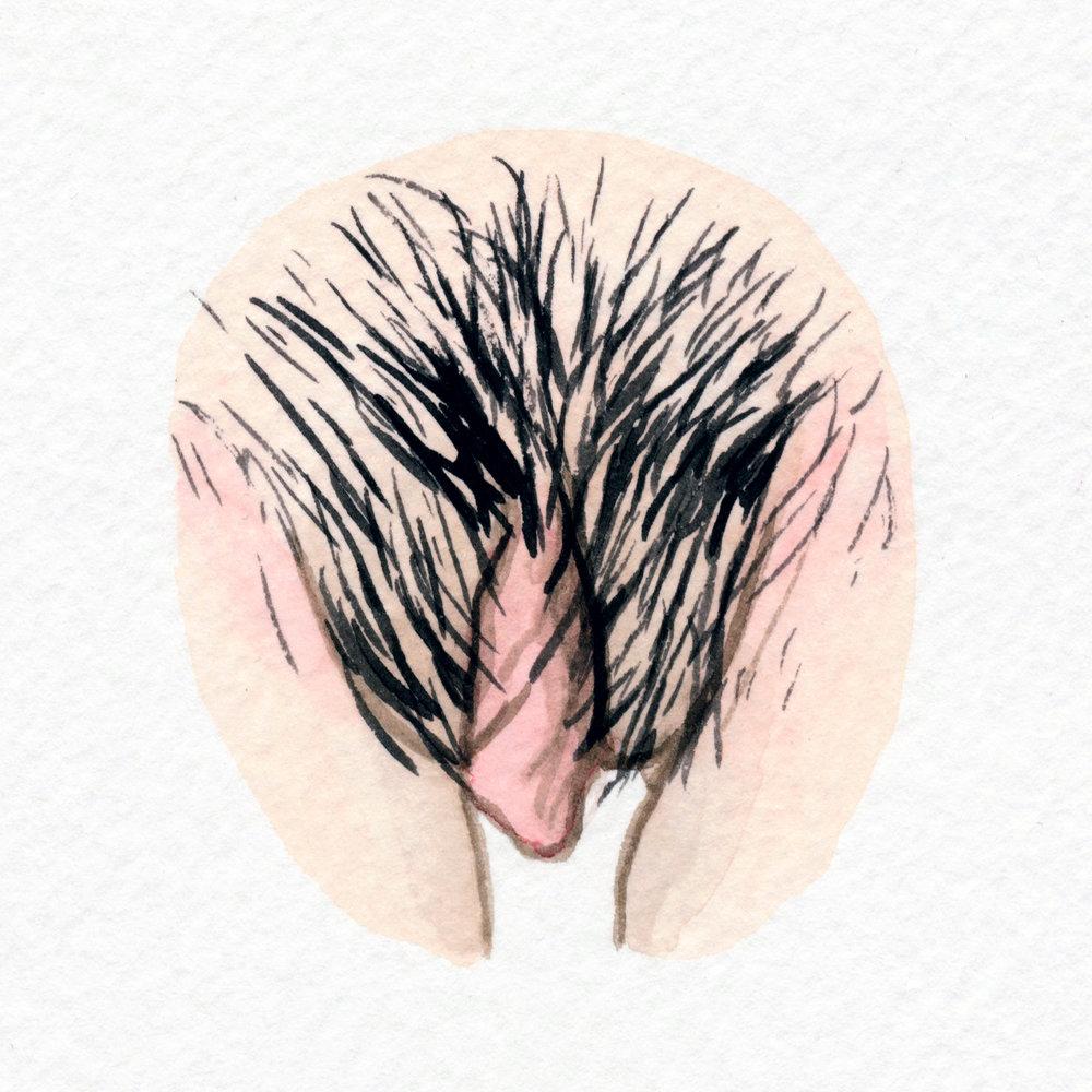 The Vulva Gallery - Vulva Portrait #126.jpg