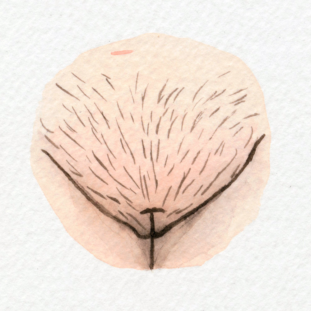 The Vulva Gallery - Vulva Portrait #137.jpg