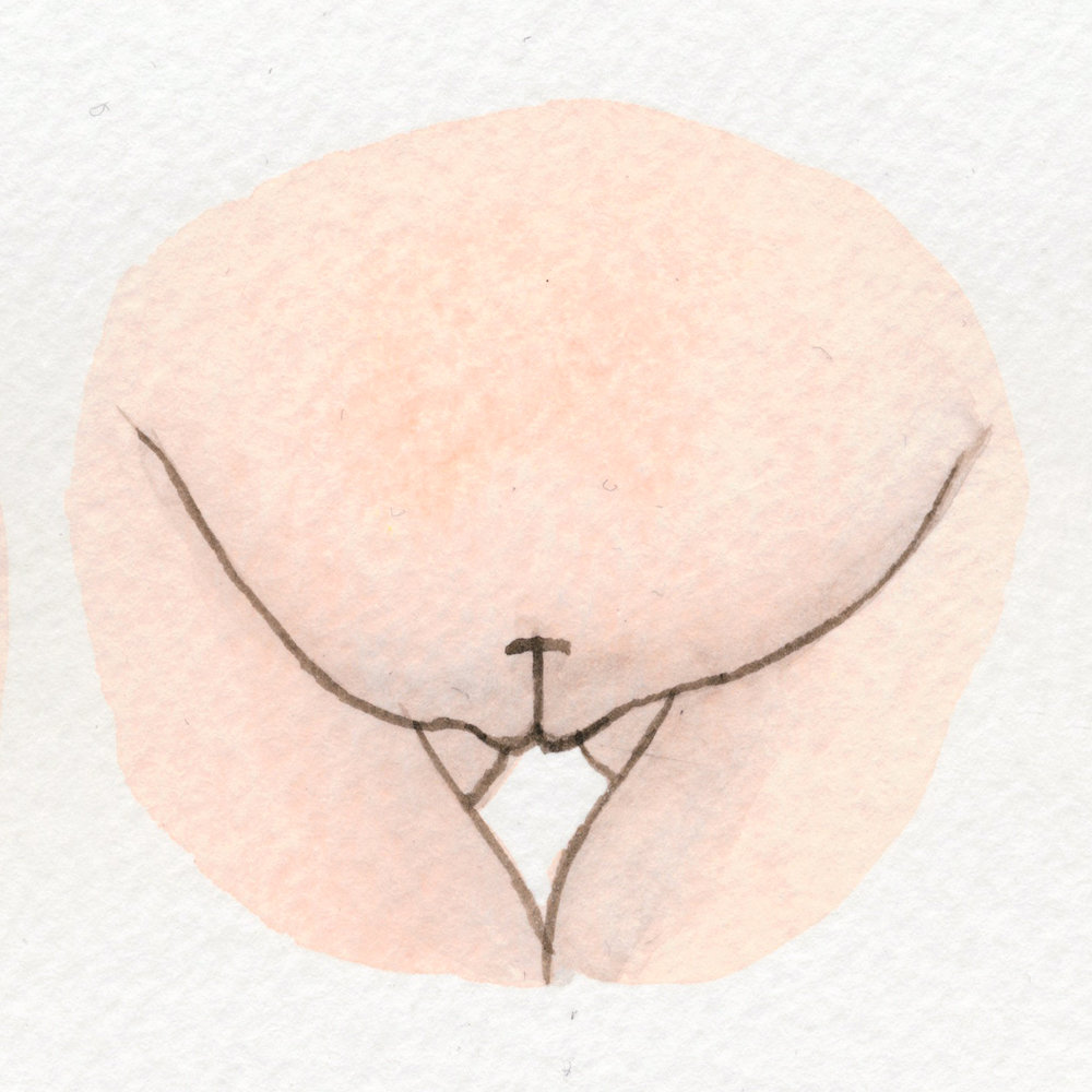 The Vulva Gallery - Vulva Portrait #139.jpg