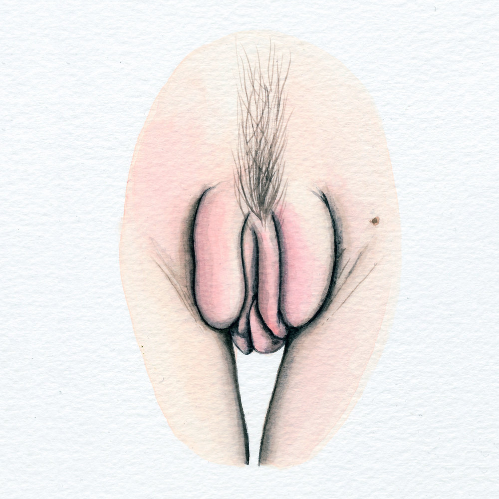 The Vulva Gallery - Vulva Portrait #165 (s).jpg