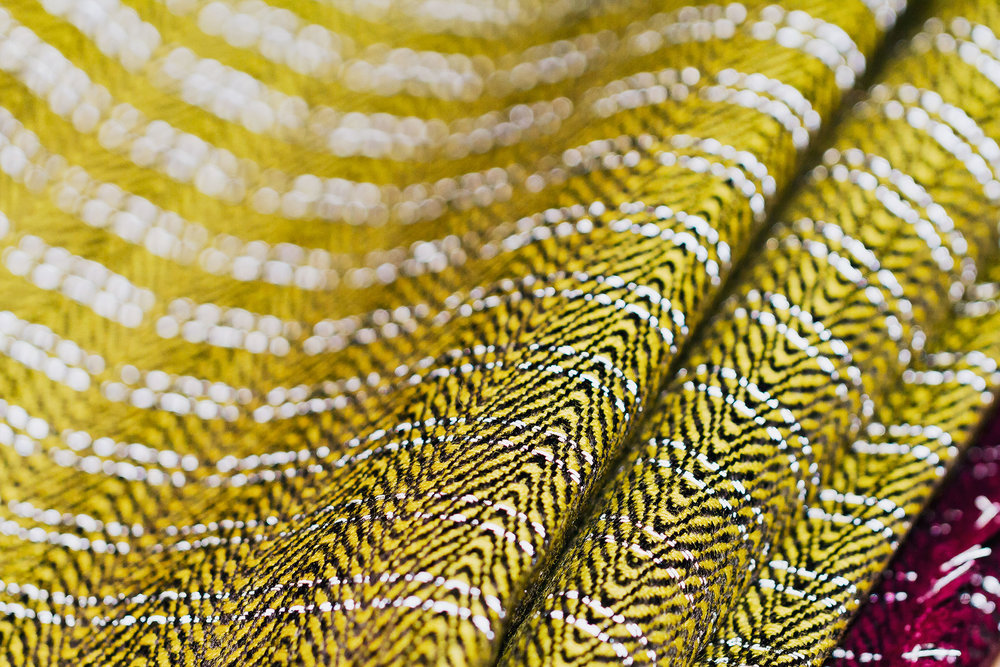 Vibrant Yellow fabric