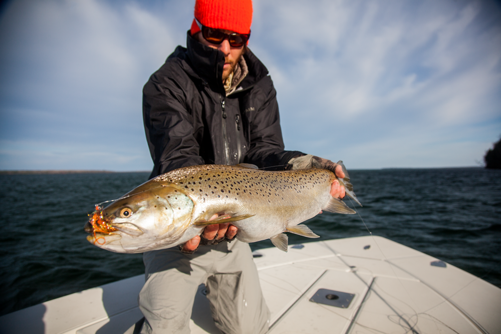 Nearshore Trout