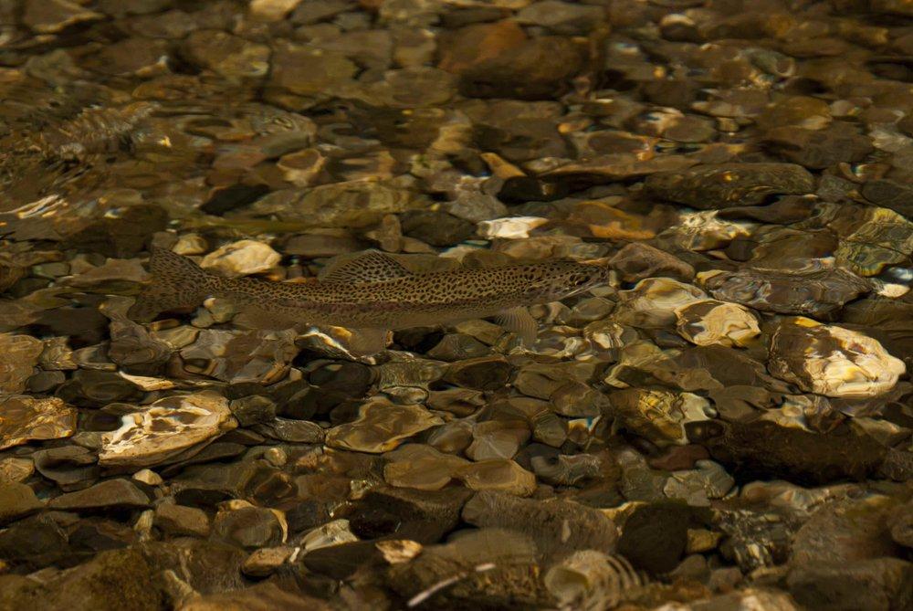 Recomendaciones y descuentos en los mejores lodges de pesca del país.