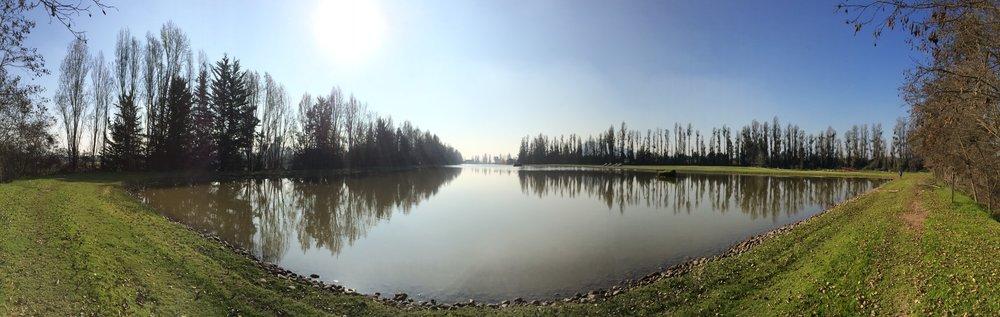 Laguna Los Morros - Paraíso de la pesca de carpas