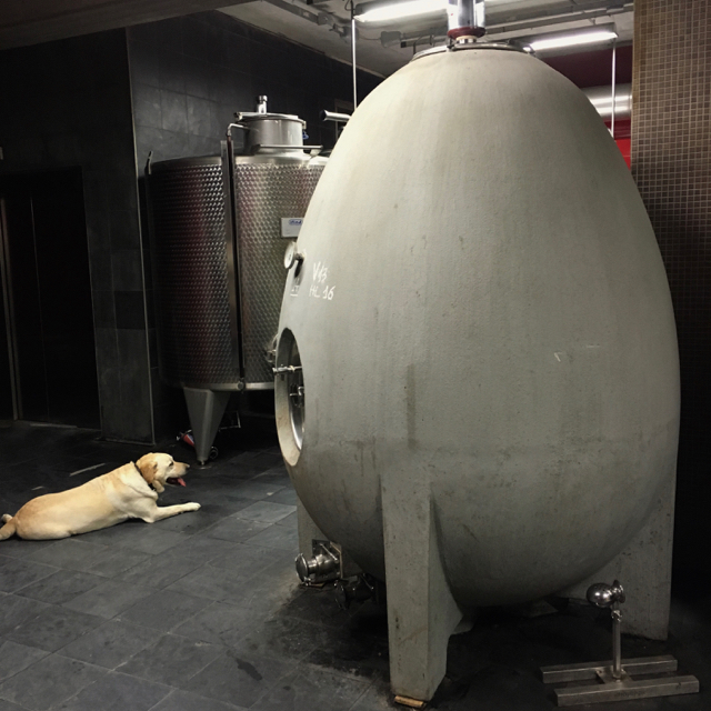Concrete egg fermentation tank