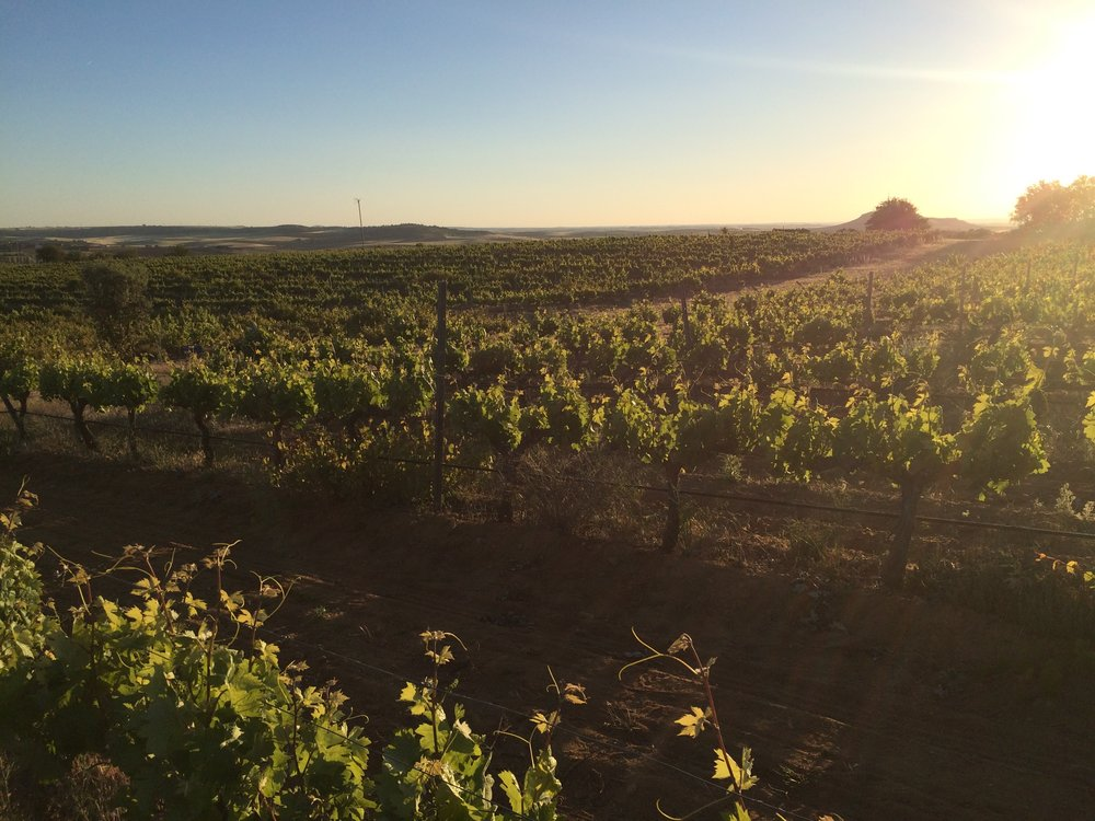 Finca Volvoreta Organic Vineyard