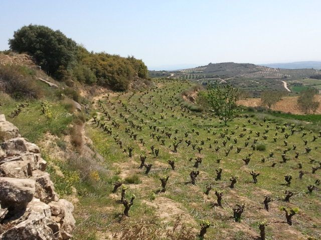 Old Garnacha Vineyard