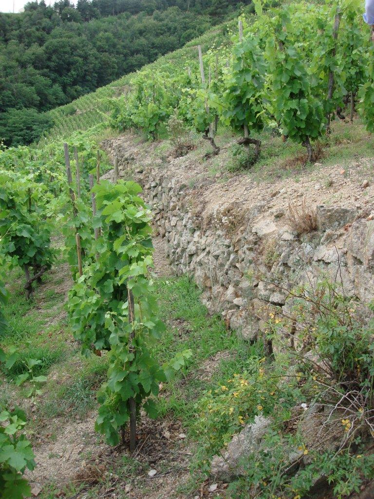Despesse Vineyard.jpg