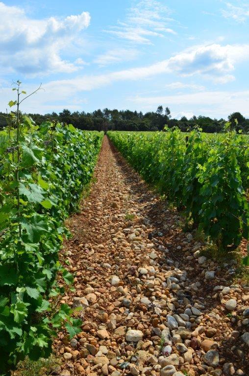Montcalmes Vineyard - 7.jpg