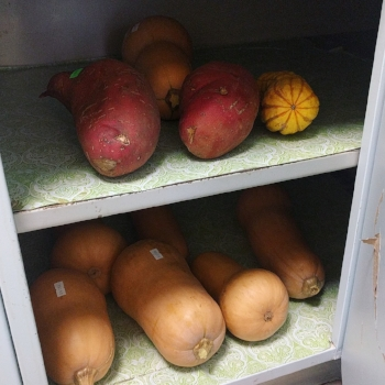Stock up & store: most winter squashes will last months in a cool dark cupboard!