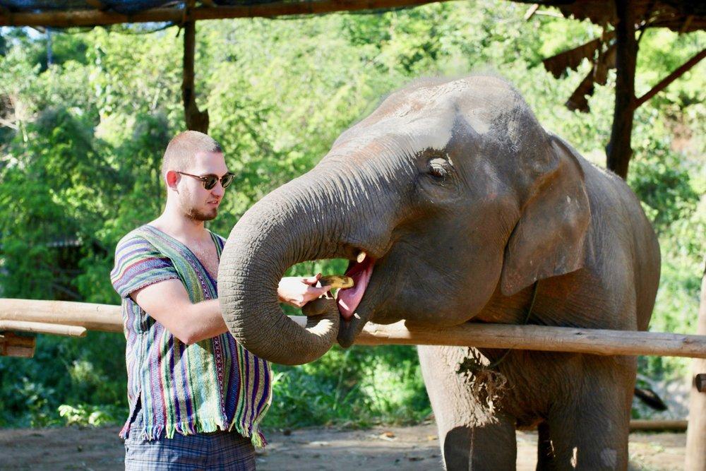 Chiang Mai Elephant Santuary