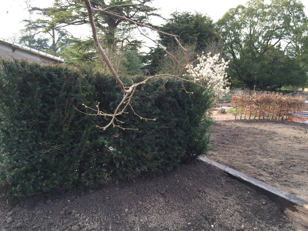Hedging and soil 018.jpg