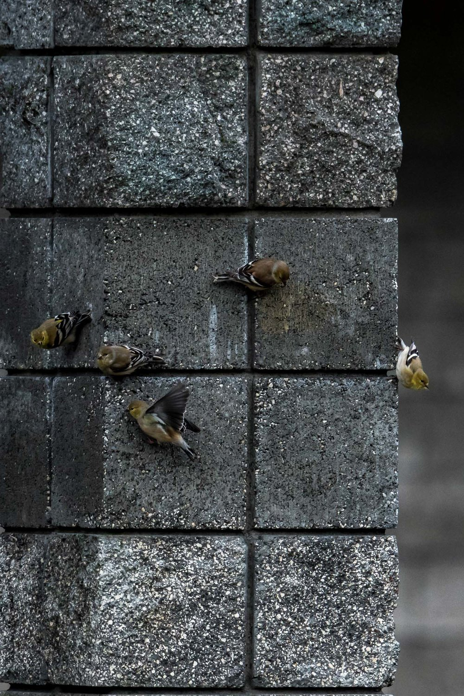 Birds_2017-13.jpg