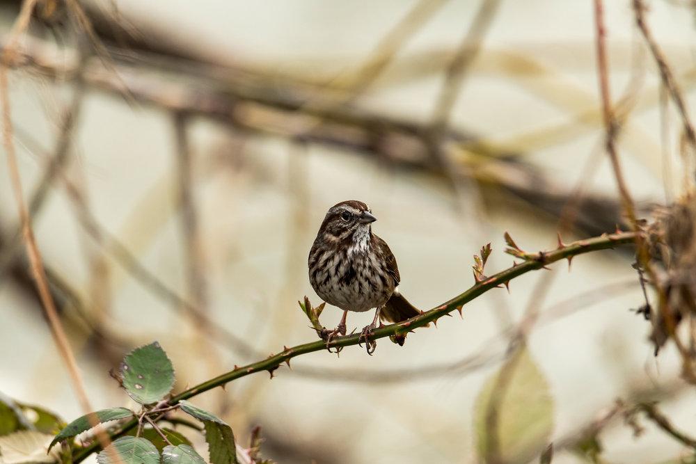 Birds_2017-25.jpg