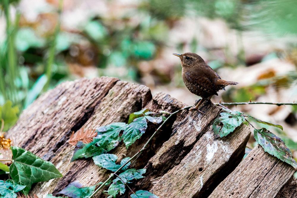 Birds_2017-29.jpg