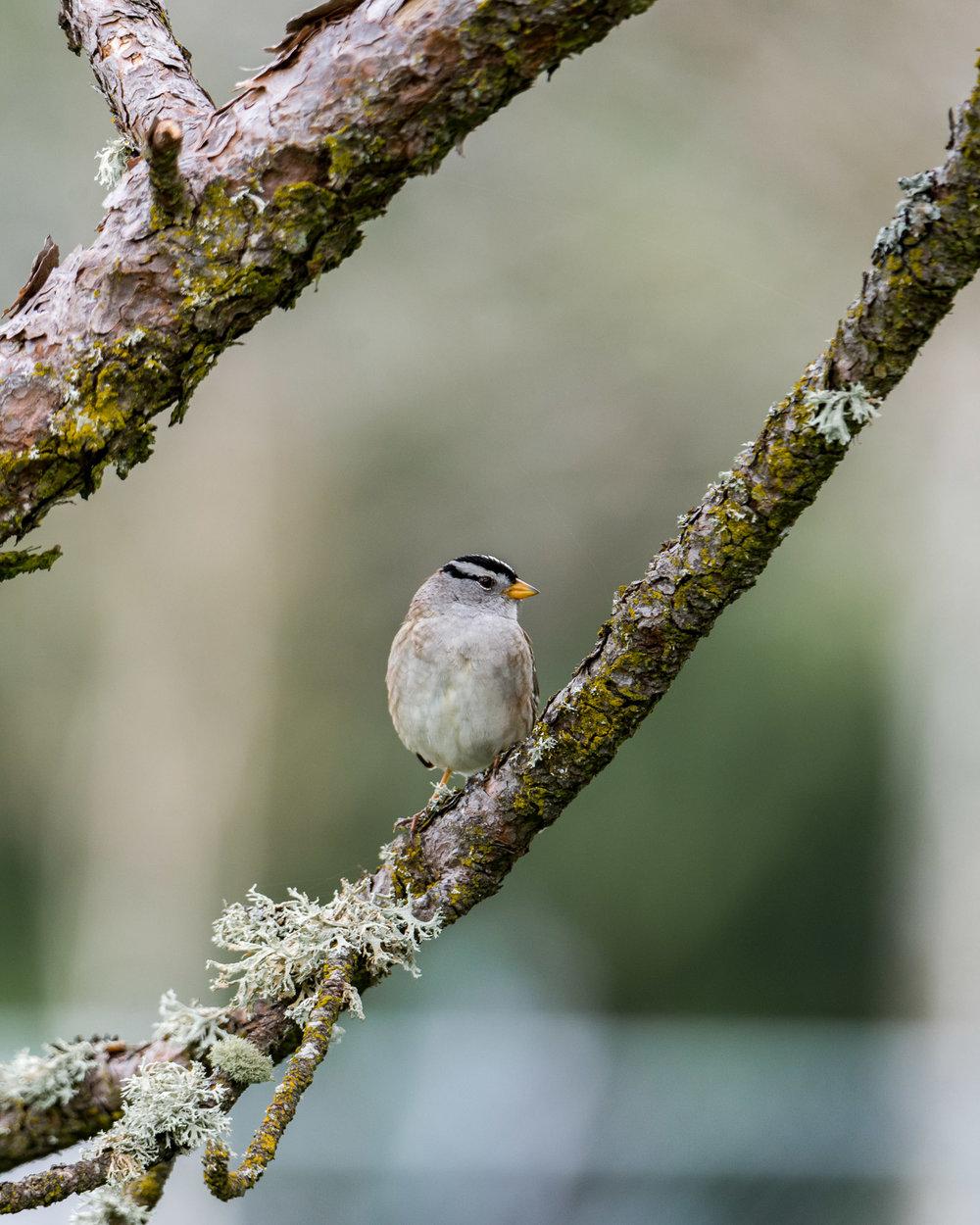Birds_2017-39.jpg