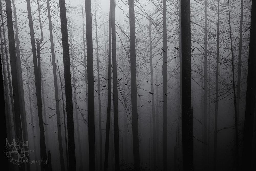 Misty_03.jpg