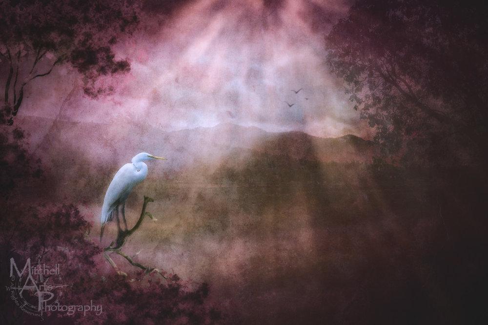 Surreal Egret.jpg