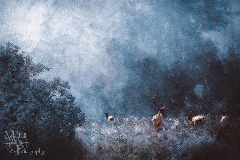 Sureal Elk.jpg