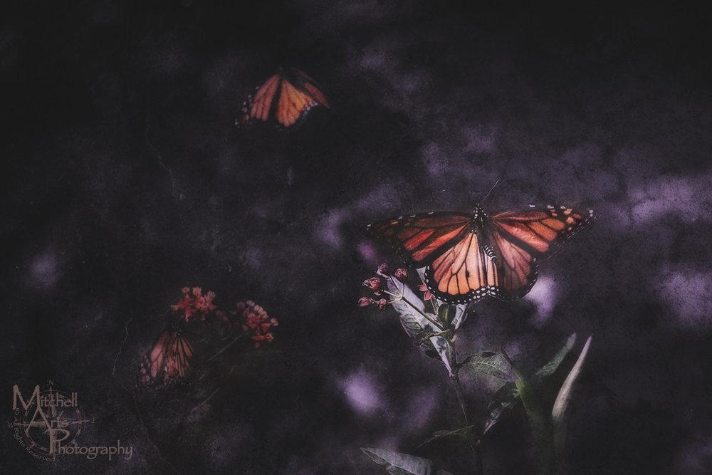 Surreal Monarchs.jpg