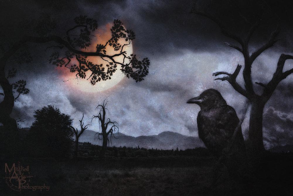 Surreal Crow.jpg