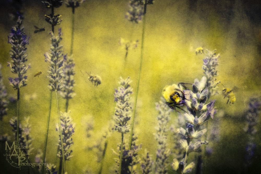 Surreal Bee.jpg
