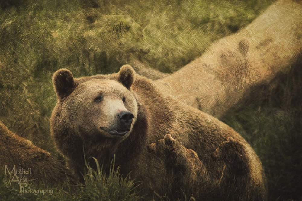 Surreal Bears.jpg