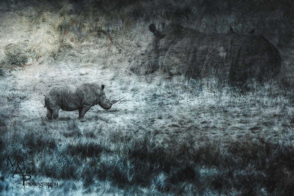 Surreal Rhino.jpg