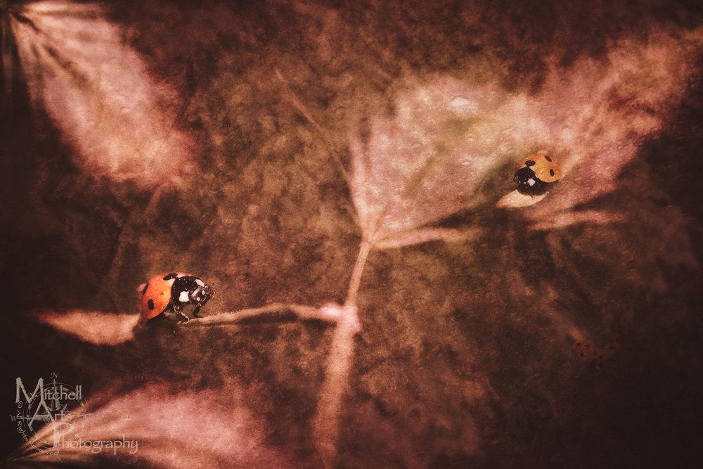 Surreal Lady Bug.jpg
