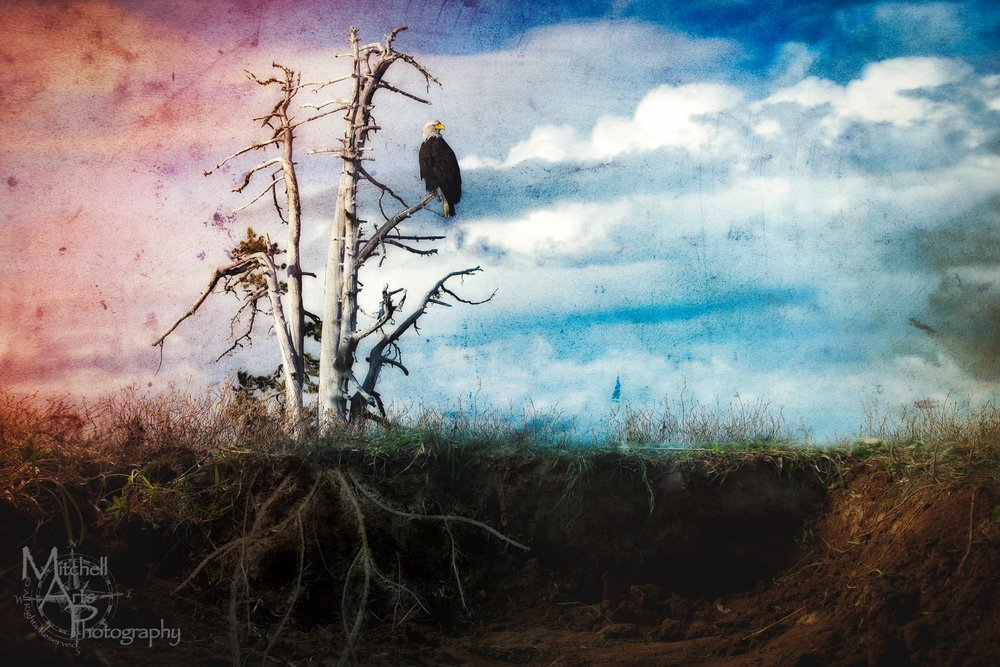 Surreal Eagle.jpg