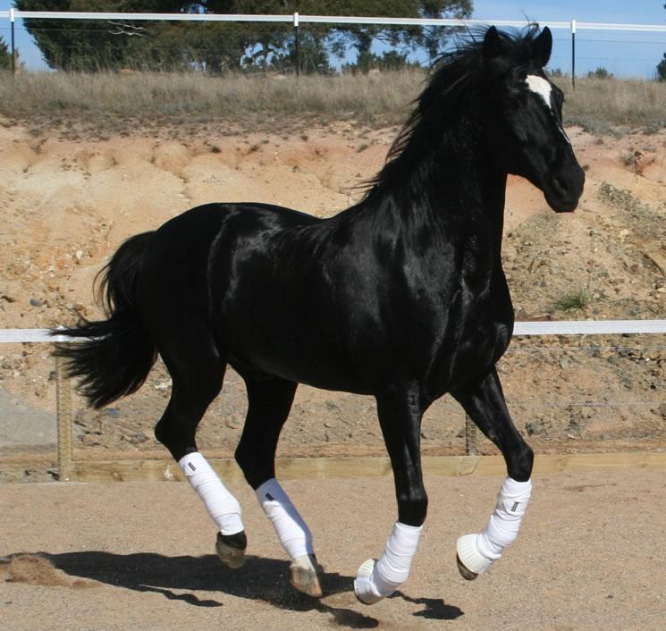 Stallions.jpg