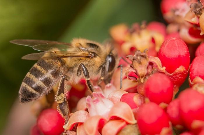 When good bees go bad - For C&EN(June 20, 2018)Image credit:Philip Marsden/Shutterstock