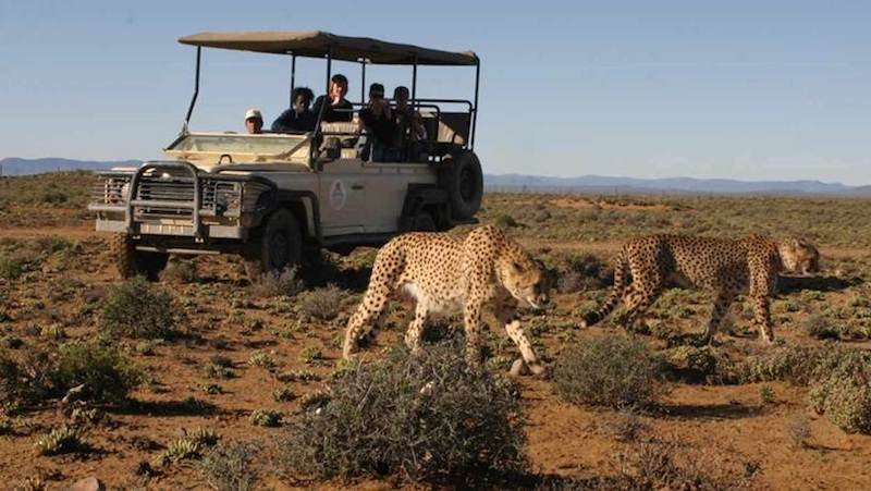 Safari at Kruger National Park. Pic Google.