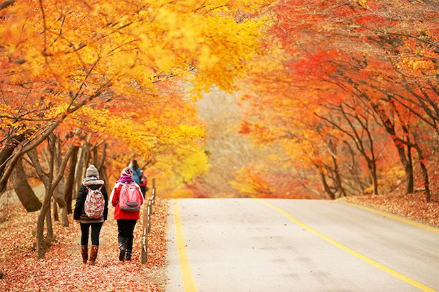 korea autumn tour