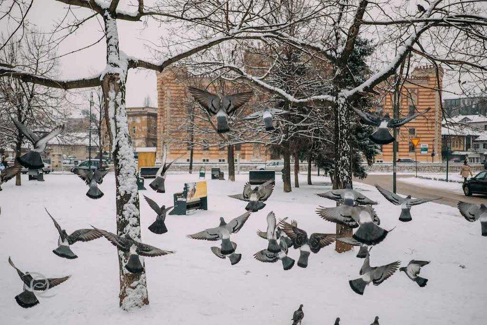 I love Sarajevo