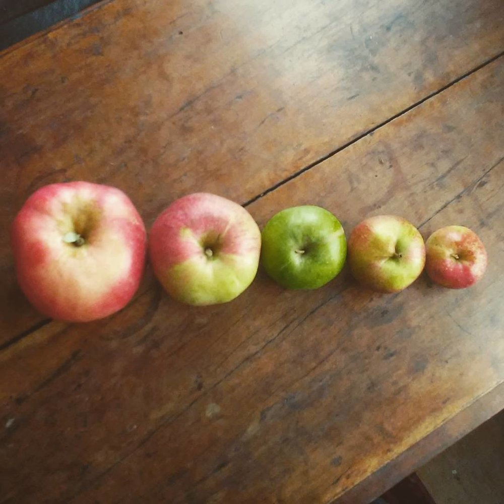 TABLE APPLES.jpg