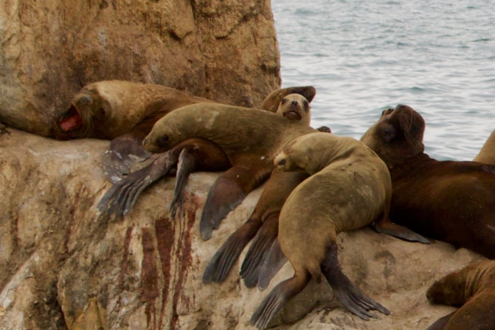 sea lion faces - 1.jpg