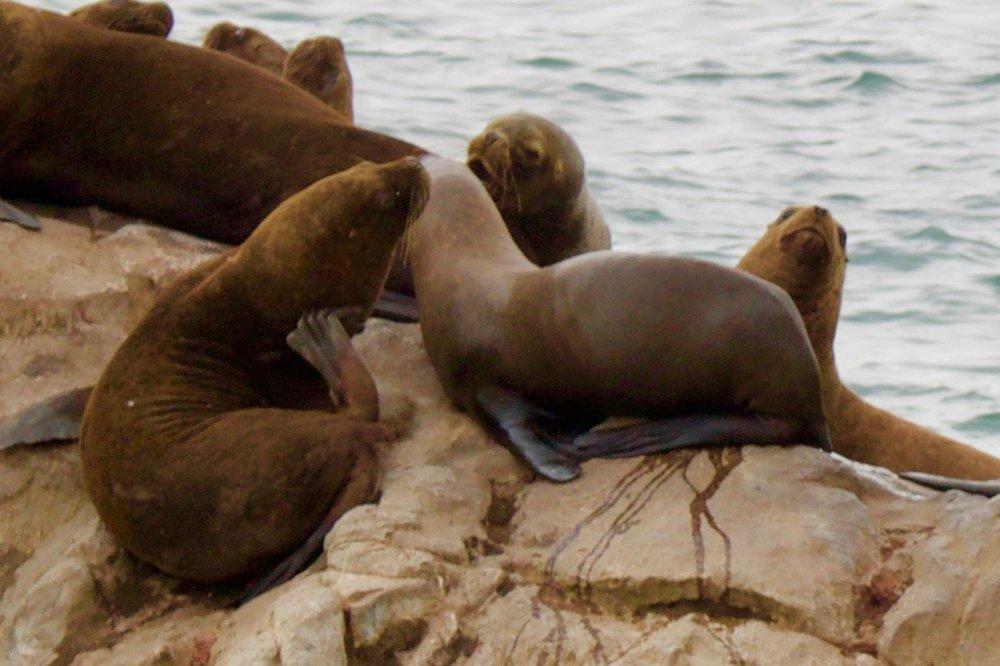 sea lion faces - 2.jpg